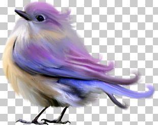 Dark Bird Computer Software PNG