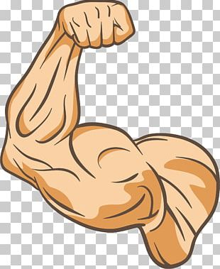 Muscle Physical Fitness Thumb PNG