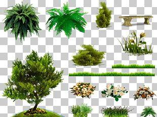 Pine Family Vegetation Soil Biome Trunk PNG
