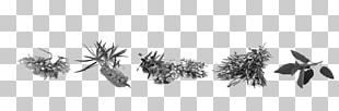 Seaweed Bath Salts Dead Sea Salt Thalassotherapy PNG