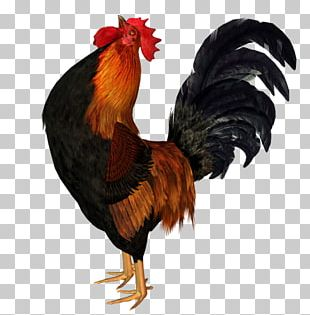 Chicken Rooster Animation Bird PNG