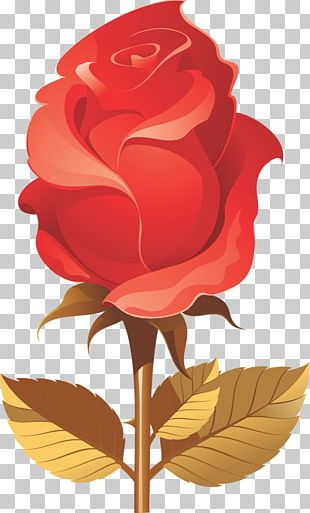 Garden Roses Beach Rose Black Rose PNG