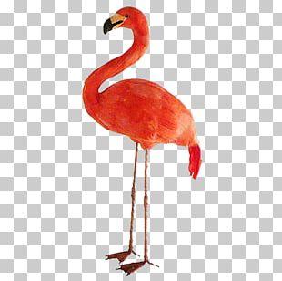 Bird Common Ostrich Greater Flamingo Beak PNG