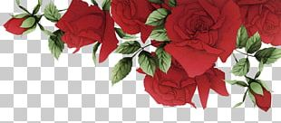 Garden Roses Beach Rose Red Flower PNG
