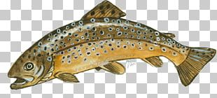 Salmon Coastal Cutthroat Trout Brown Trout Fish Products PNG