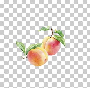 Peach Watercolor Painting Auglis PNG