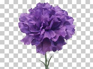 Carnation Cut Flowers Violet Artificial Flower PNG