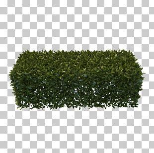 Hedge Garden Shrub Pruning PNG