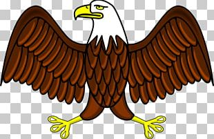 Bald Eagle Philippine Eagle Free Content PNG
