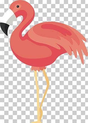 Flamingos Bird Icon PNG