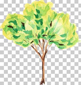 Tree Watercolor Painting Art PNG