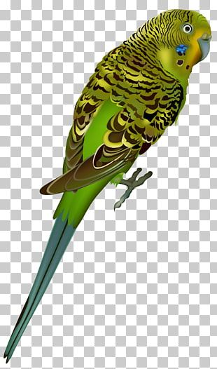 Birds PNG