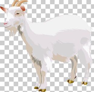 Boer Goat Sheep Three Billy Goats Gruff PNG