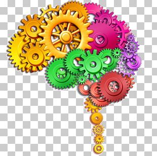 Human Brain Stock Photography Function PNG