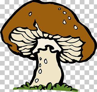 Honey Fungus Mushroom PNG