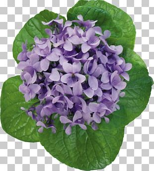 Violet Flower Photography PNG