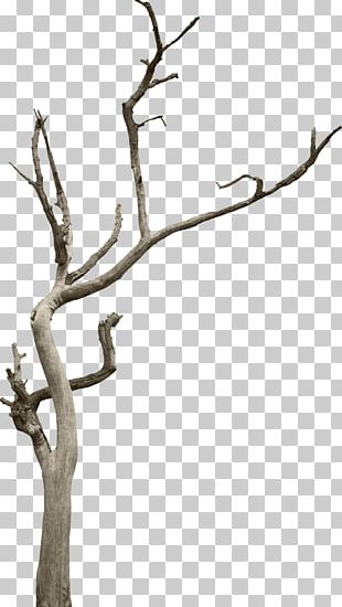 Tree Branch Woody Plant Snag PNG