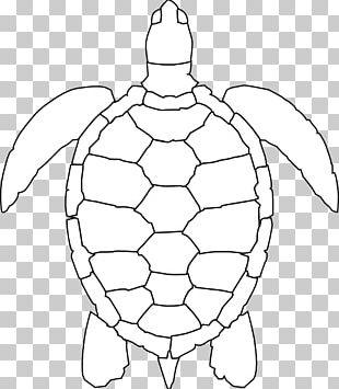 Green Sea Turtle Drawing PNG