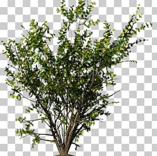Shrub Flower PNG