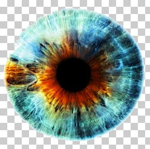 Iris Human Eye Eye Color PNG