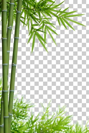 Bamboo Stock Photography PNG