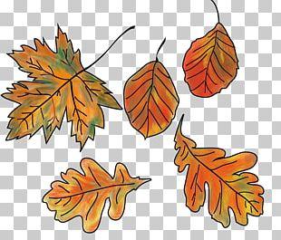 Autumn Leaf Color Bunt Sind Schon Die Wälder PNG