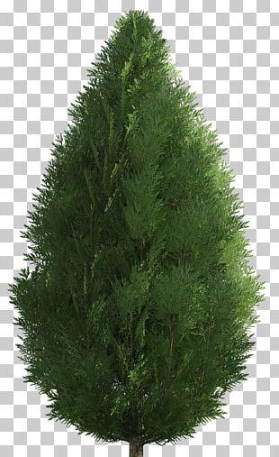 Shrub Garden Tree PNG