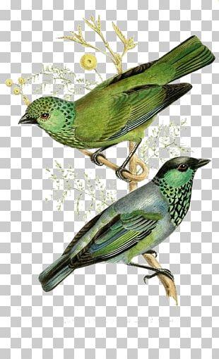 The Birds Of America Printmaking Vintage Print Illustration PNG