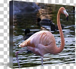 Water Bird Beak Fauna Wildlife PNG