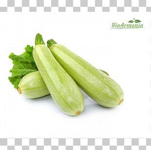 Cucurbita Pepo Summer Squash Zucchini Vegetable PNG