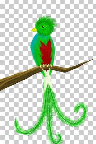 Guatemala Bird Quetzal Drawing PNG