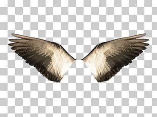 Bird Flight Wing Stock.xchng Water Bird PNG