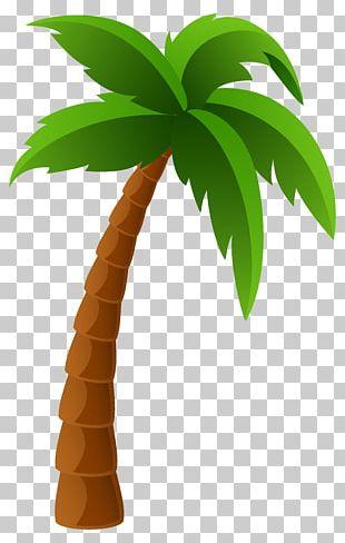 Washingtonia Filifera Arecaceae Washingtonia Robusta PNG