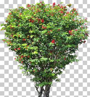 Tree Flower Shrub PNG