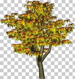 Tree Autumn PNG