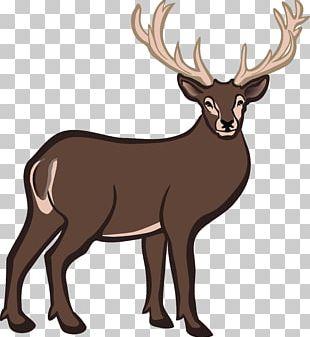White-tailed Deer Reindeer PNG