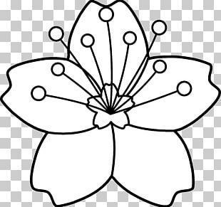 Cherry Blossom Coloring Book Flower PNG