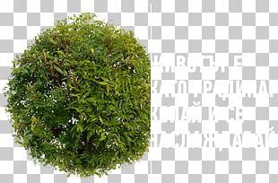Tree Stock Photography PNG