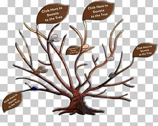 Branch Adoption Family Tree Genealogy PNG