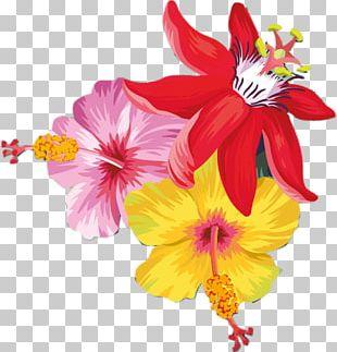 Rosemallows Cut Flowers Petal Annual Plant Herbaceous Plant PNG