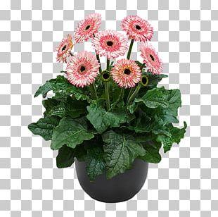 Floristry Cut Flowers Plant Gerbera Jamesonii PNG
