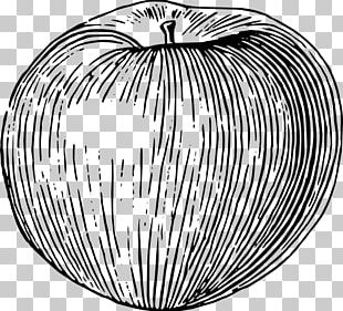 Drawing Apple Fruit PNG