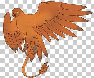 Eagle Hawk Beak Feather PNG
