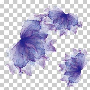 Adobe Illustrator Euclidean PNG