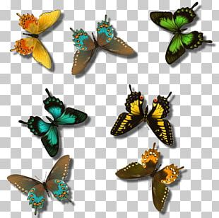 Butterfly Insect Pollinator Greta Oto Arthropod PNG