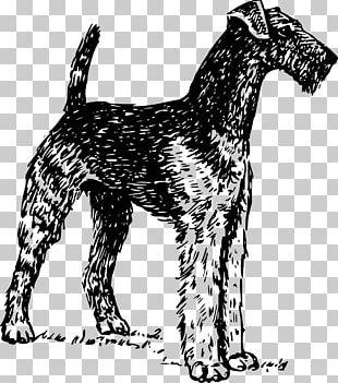 Airedale Terrier Bedlington Terrier Cairn Terrier Bull Terrier PNG