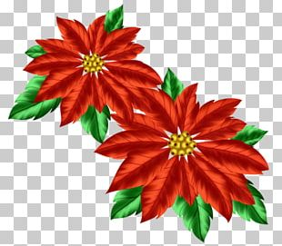 Christmas Decoration Poinsettia PNG