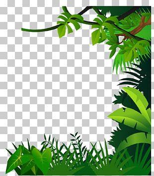 Drawing Jungle PNG