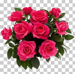 """Garden Roses <a Href=""""/cdn-cgi/l/email-protection"""" Class=""""__cf_email__"""" Data-cfemail=""""046f716f6f65696d65446369656d682a676b69"""">[email&#160;protected]</a> Cut Flowers Floral Design PNG"""