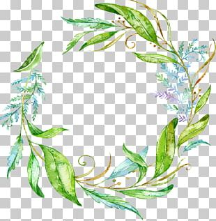 Watercolor Painting Paper Drawing Leaf Branch PNG